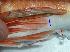 f:id:fishinfish2010:20130423132246j:image