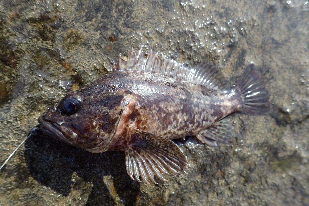 f:id:fishing-aquarium:20181023130744j:plain