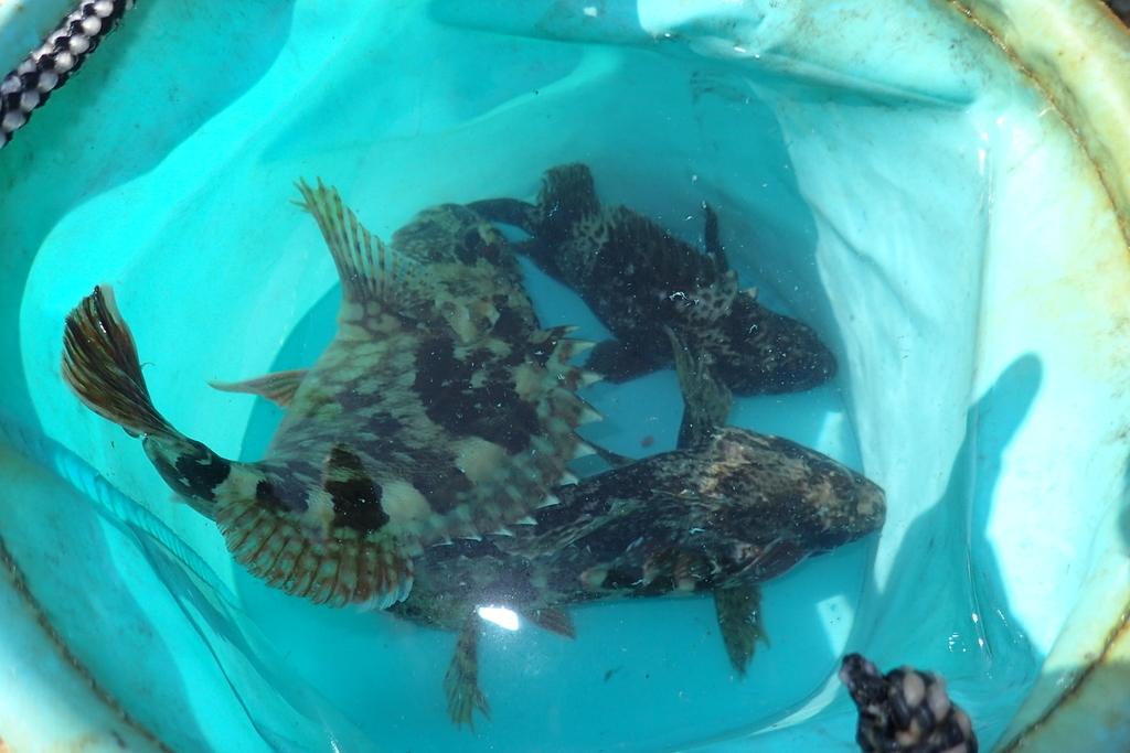 f:id:fishing-aquarium:20181027213103j:plain