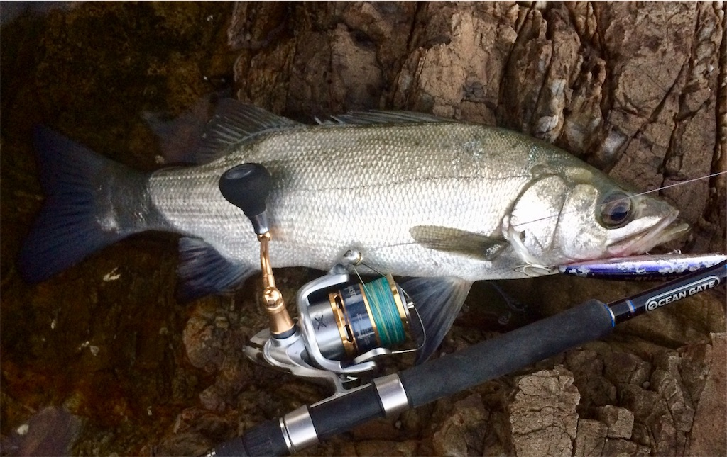 f:id:fishing-aquarium:20181102234953j:image