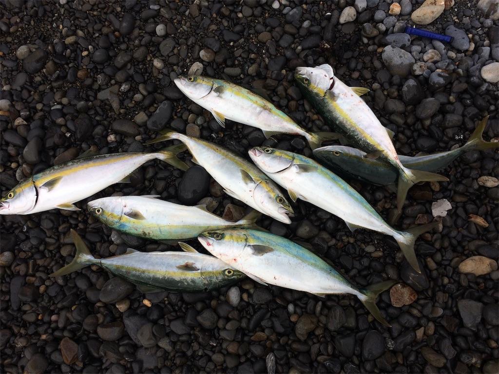 f:id:fishing-aquarium:20181108073924j:image