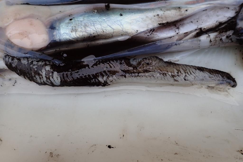 f:id:fishing-aquarium:20181213020134j:plain