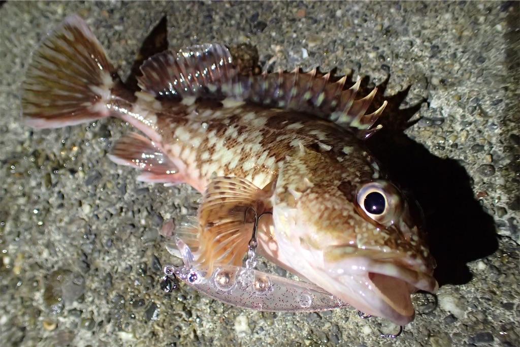 f:id:fishing-aquarium:20181221170638j:image