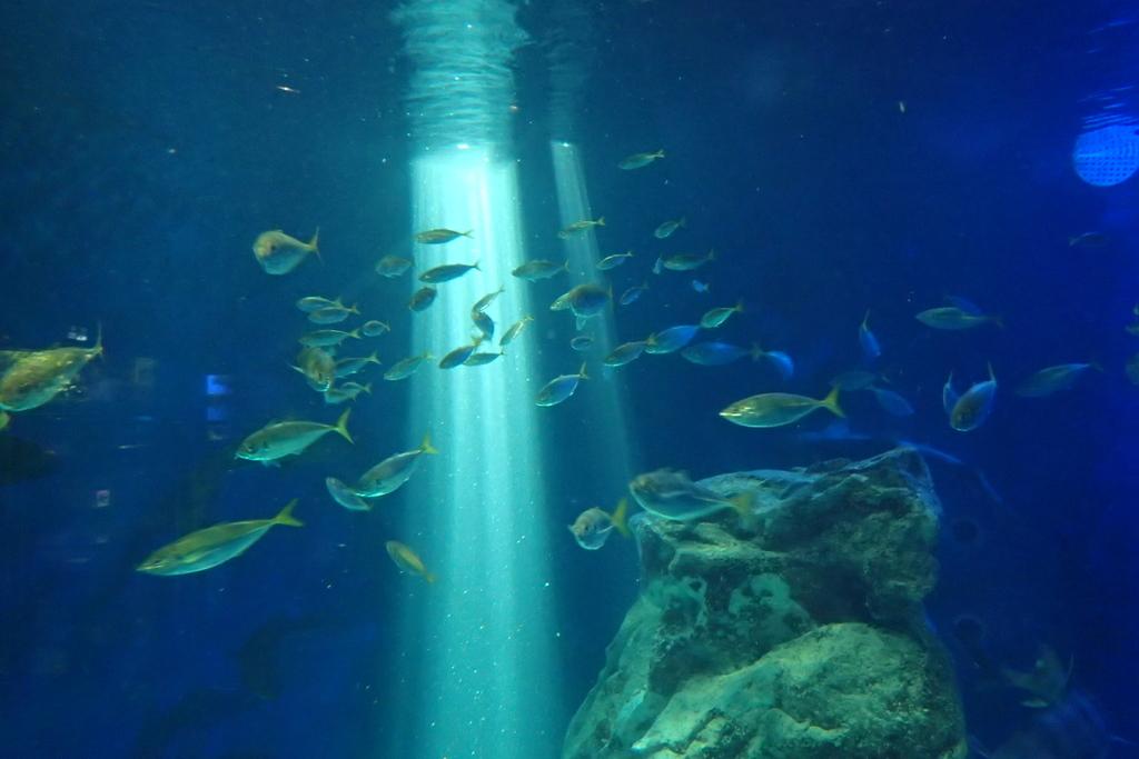 f:id:fishing-aquarium:20190119200107j:plain