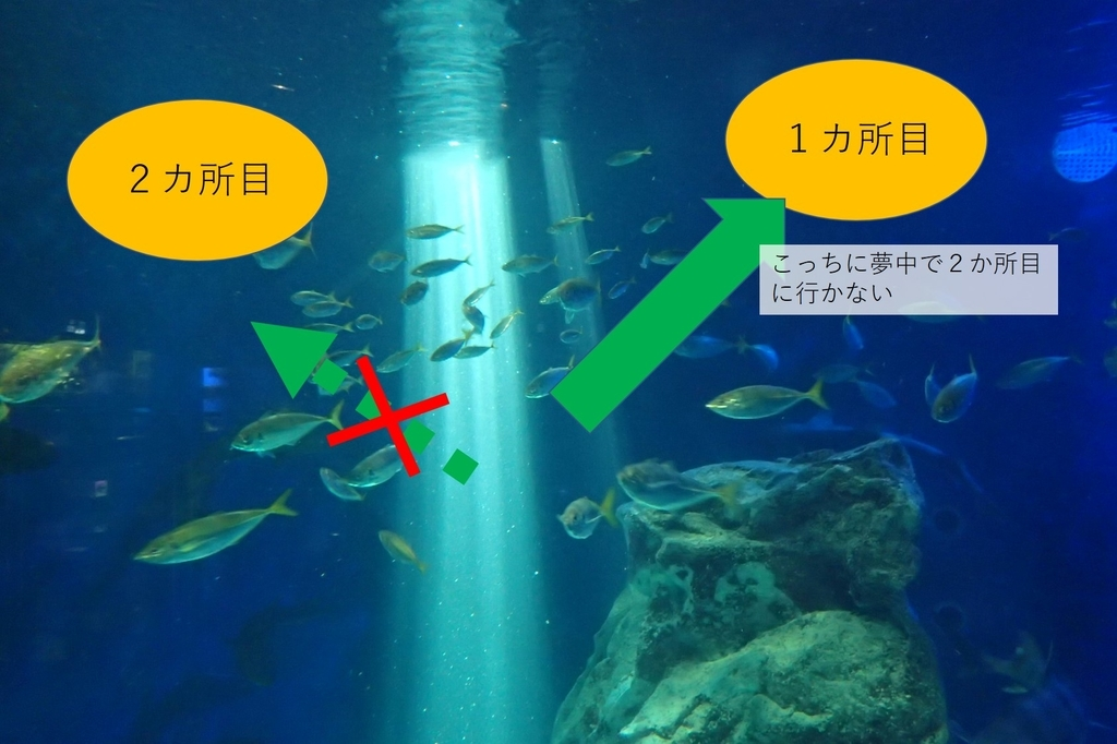 f:id:fishing-aquarium:20190119202859j:plain