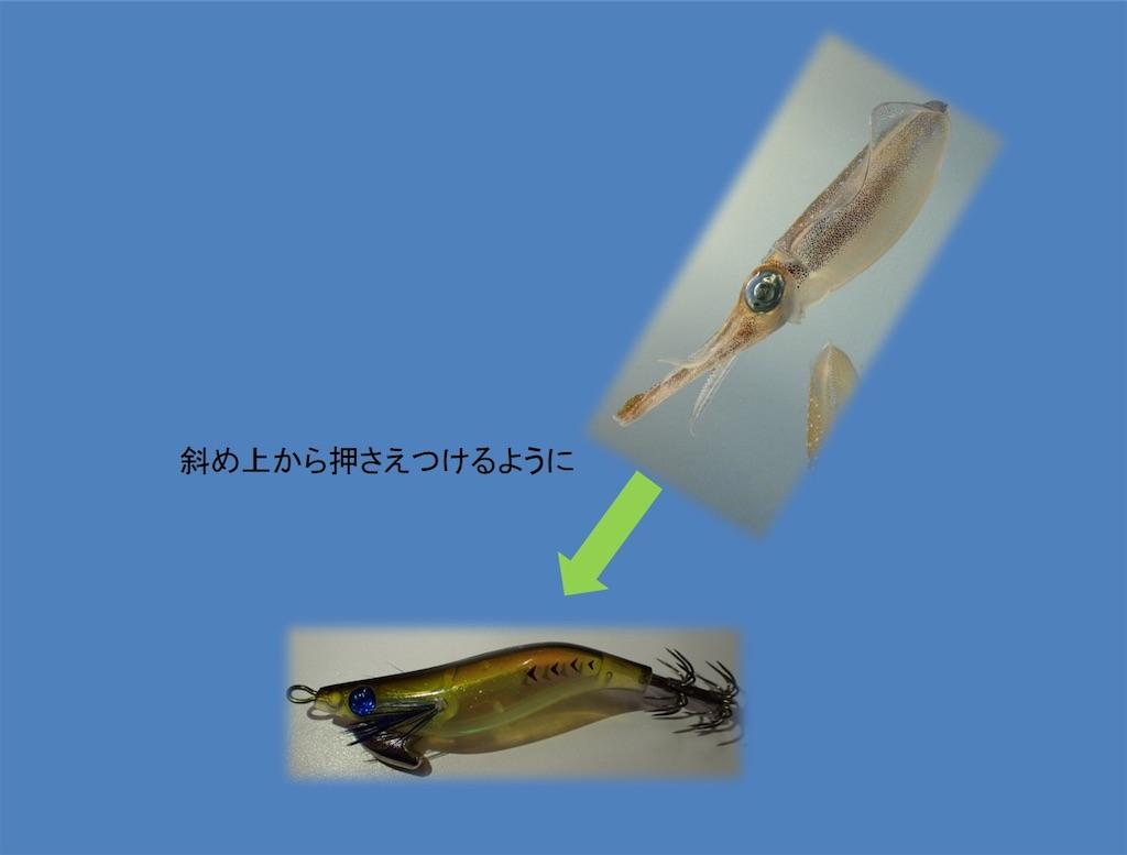 f:id:fishing-aquarium:20190124173854j:image