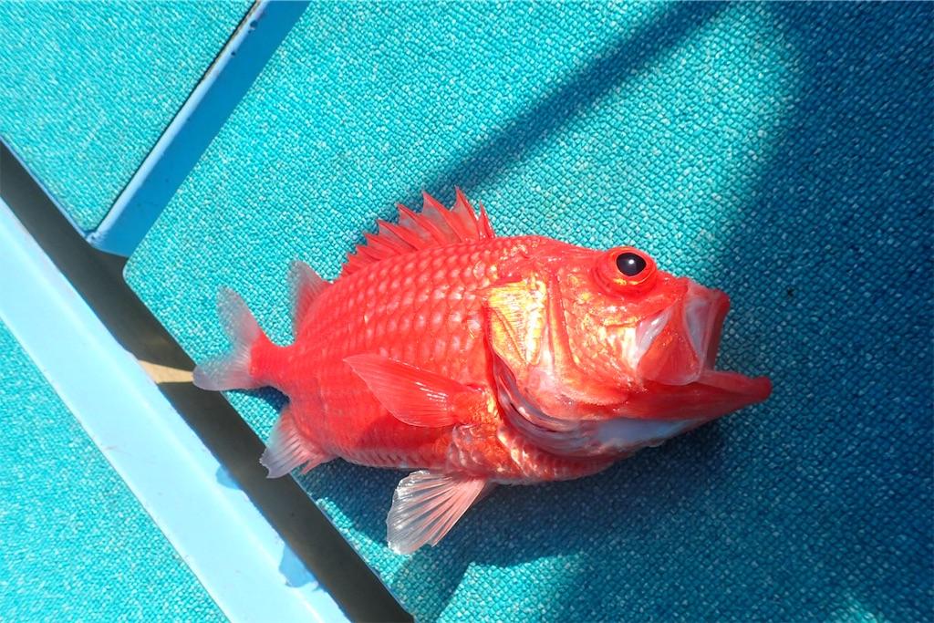 f:id:fishing-aquarium:20190216080844j:image