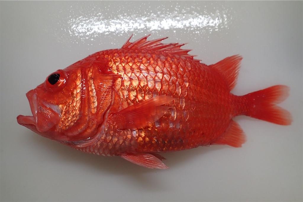 f:id:fishing-aquarium:20190217154017j:image