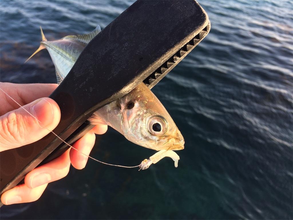 f:id:fishing-aquarium:20190219184429j:image