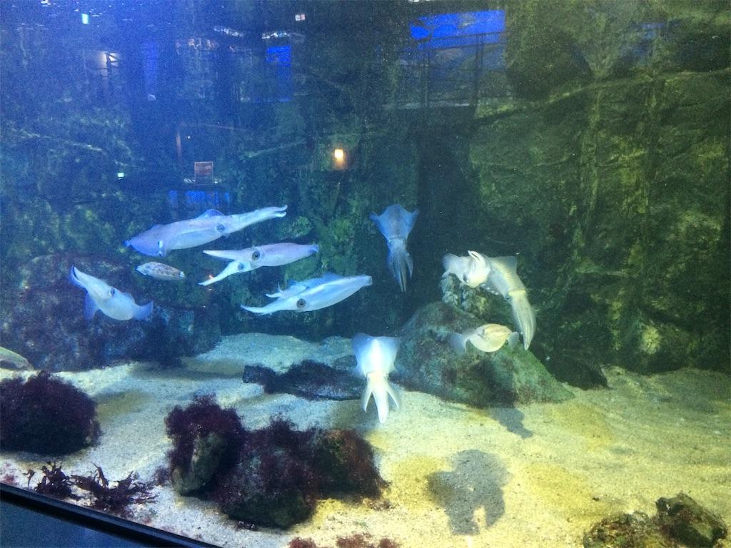 f:id:fishing-aquarium:20190314205346j:image