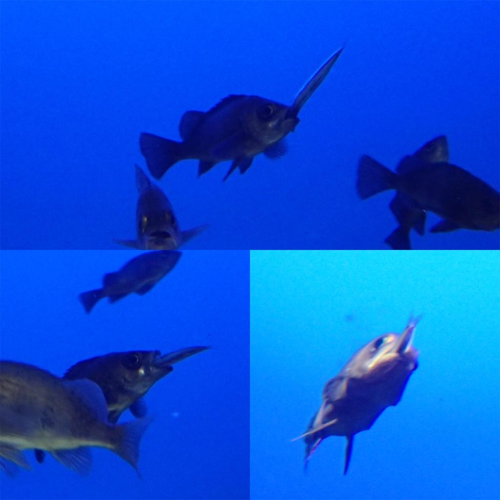 f:id:fishing-aquarium:20190315174158j:image