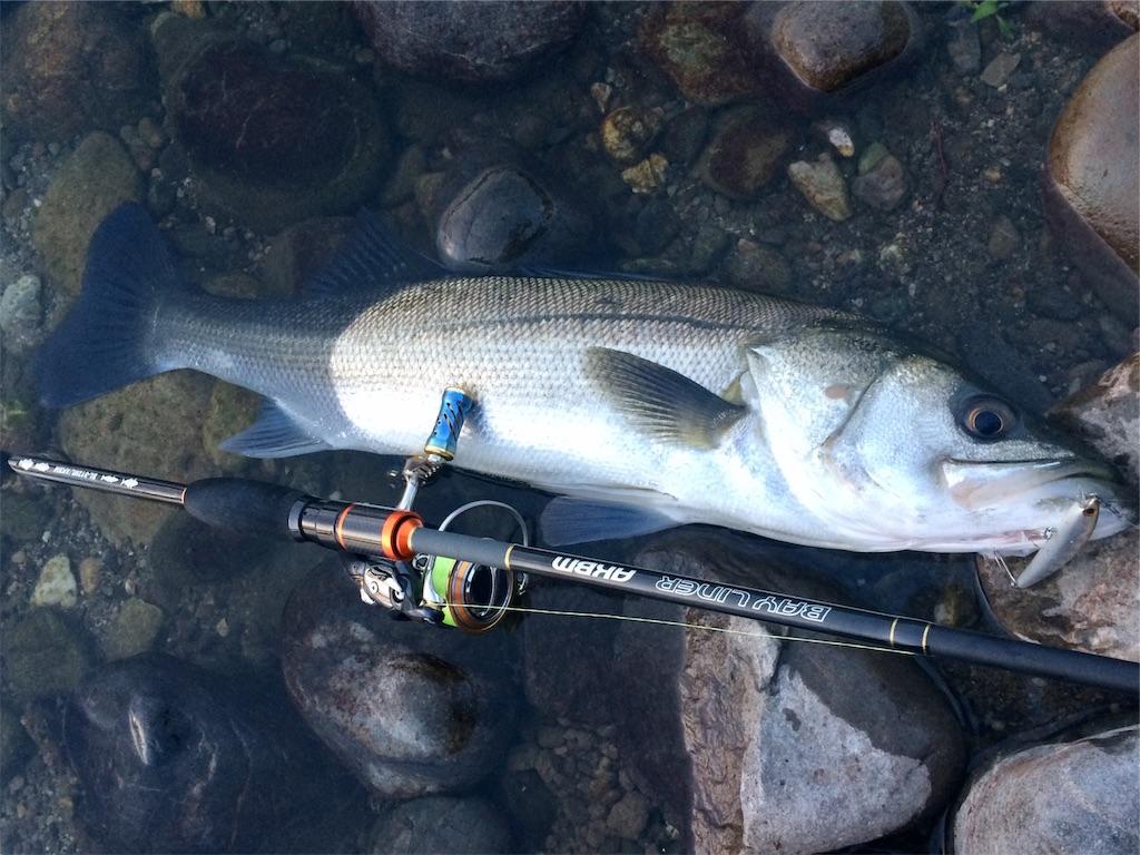 f:id:fishing-aquarium:20190515232928j:image