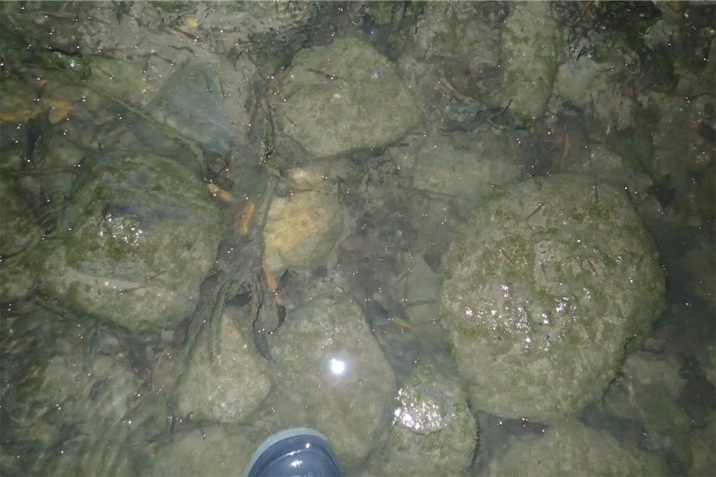 f:id:fishing-aquarium:20190603144839j:image