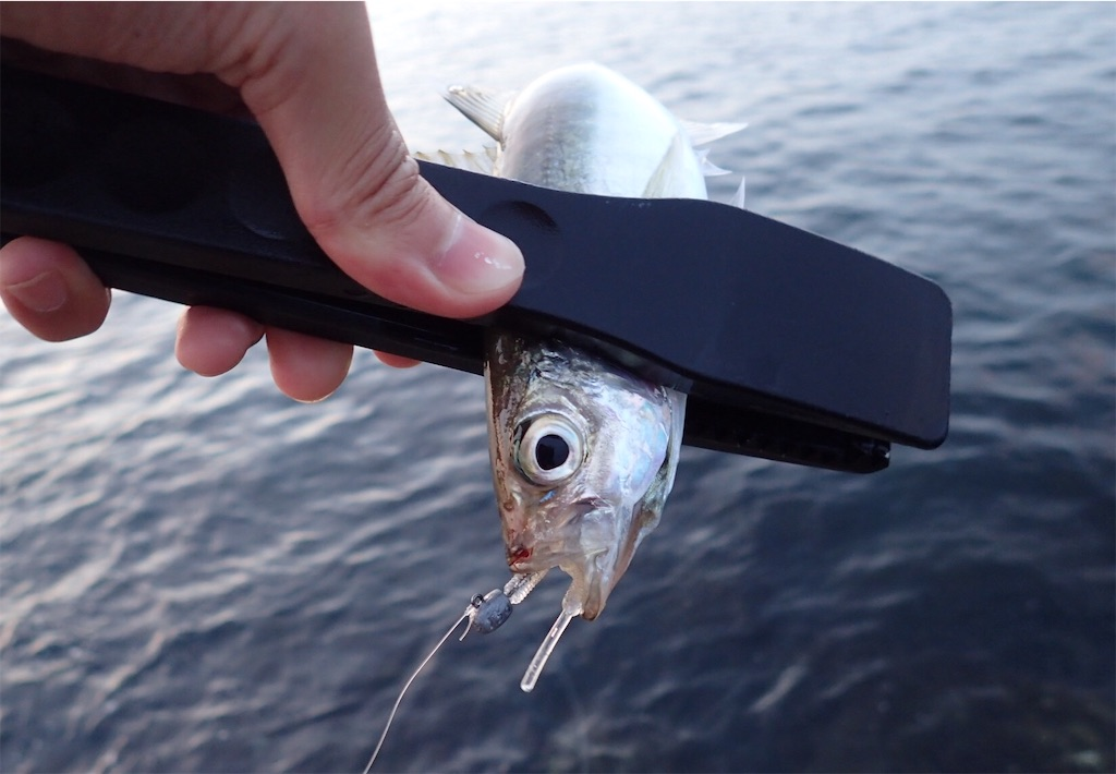 f:id:fishing-aquarium:20190619191059j:image