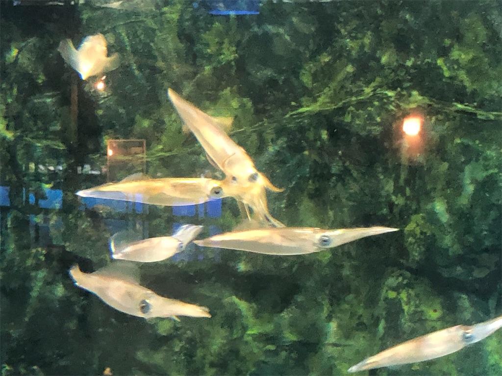 f:id:fishing-aquarium:20190803214202j:image