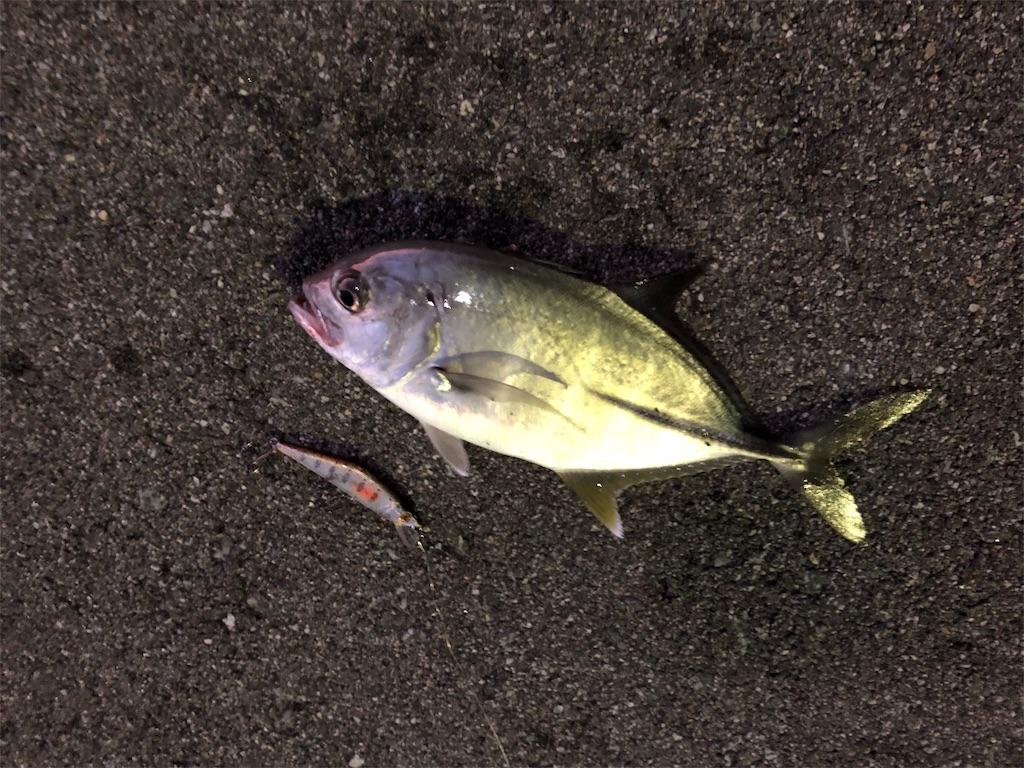 f:id:fishing-aquarium:20190917153603j:image