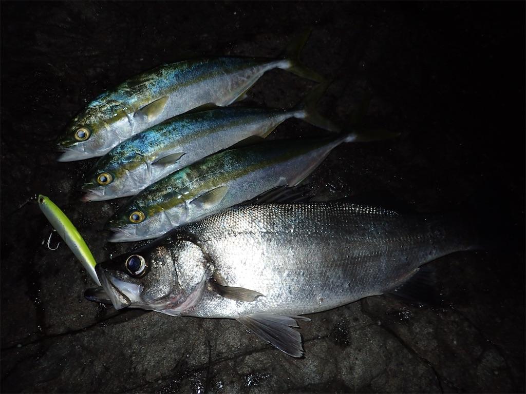 f:id:fishing-aquarium:20191101114519j:image
