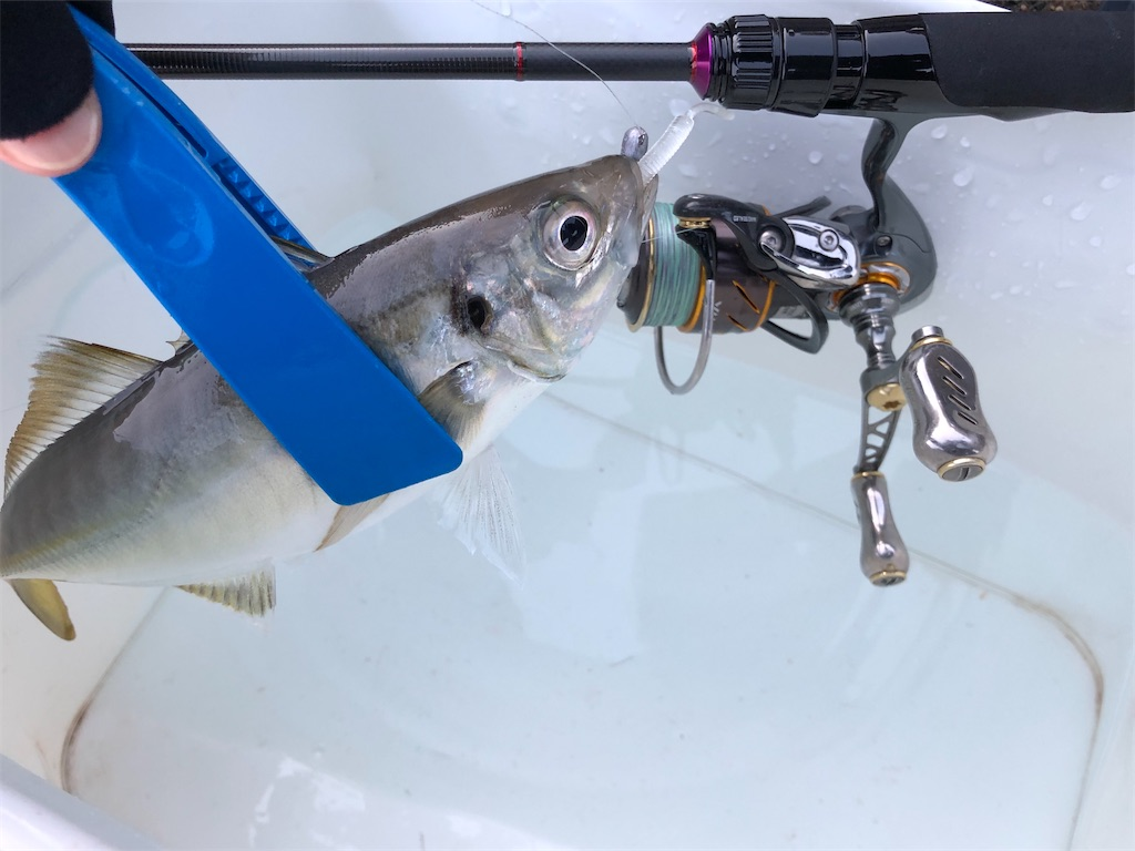 f:id:fishing-aquarium:20200210190448j:image