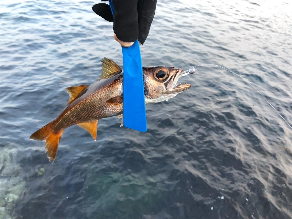 f:id:fishing-aquarium:20200301153413j:image