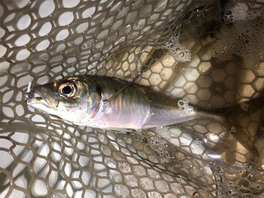 f:id:fishing-aquarium:20200327161047j:image