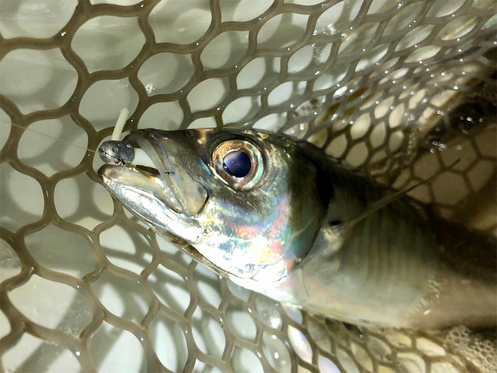 f:id:fishing-aquarium:20200327161112j:image