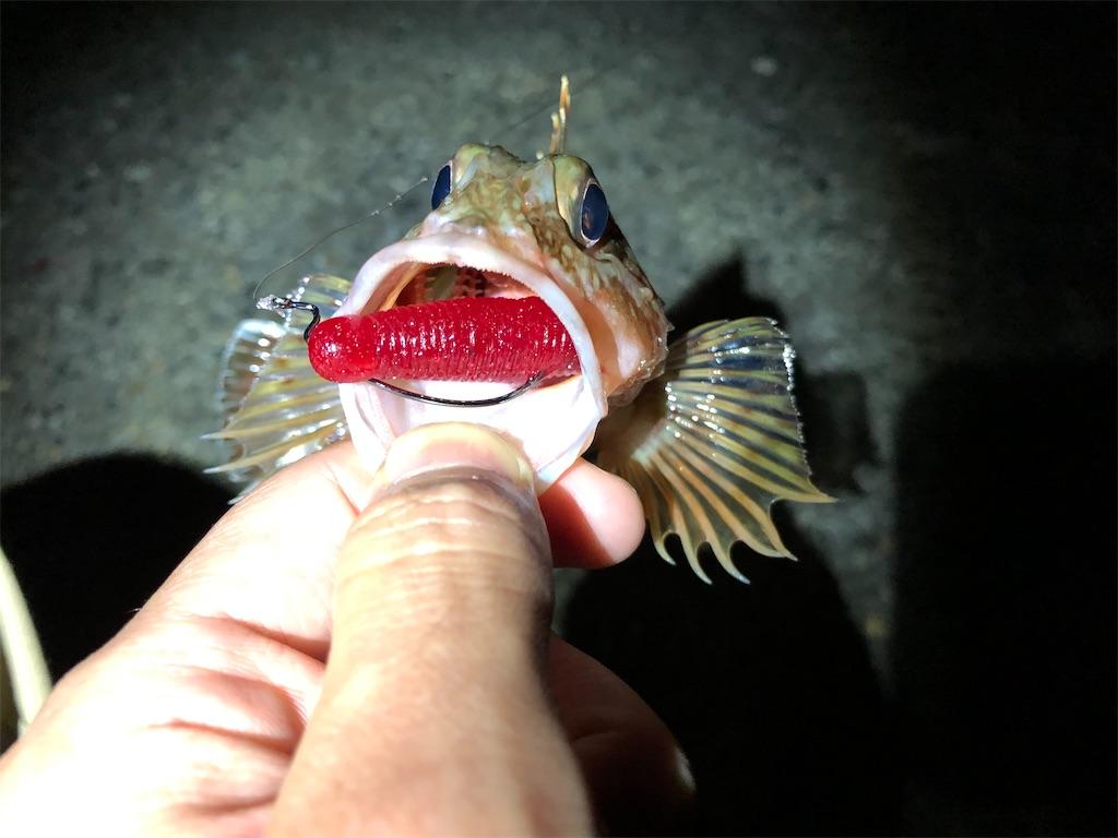f:id:fishing-aquarium:20200610142612j:image