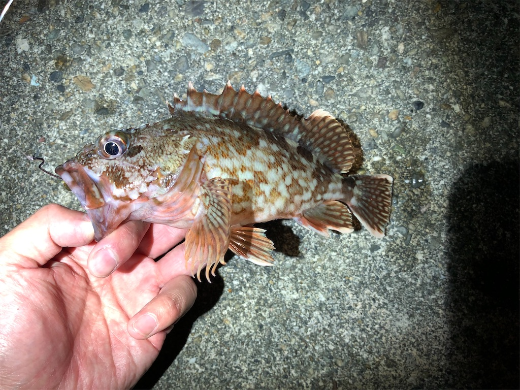 f:id:fishing-aquarium:20200610142647j:image