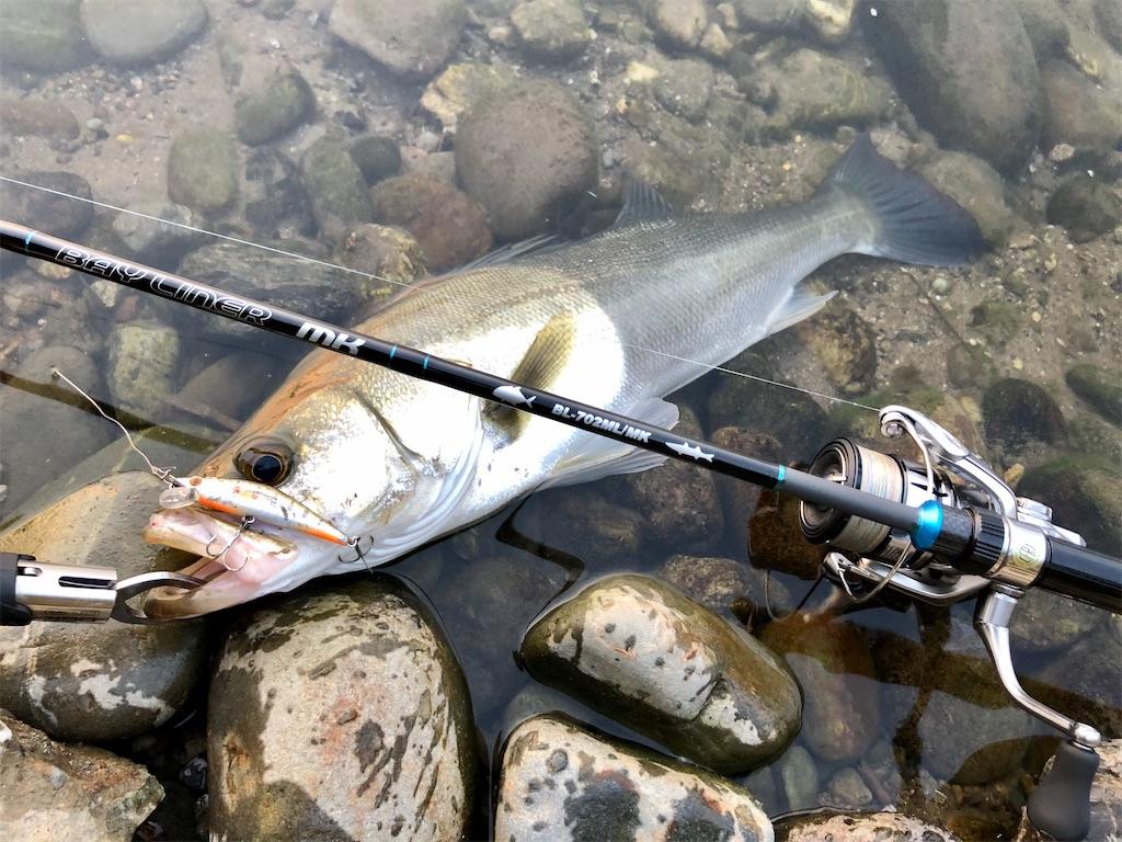 f:id:fishing-aquarium:20200618151436j:image