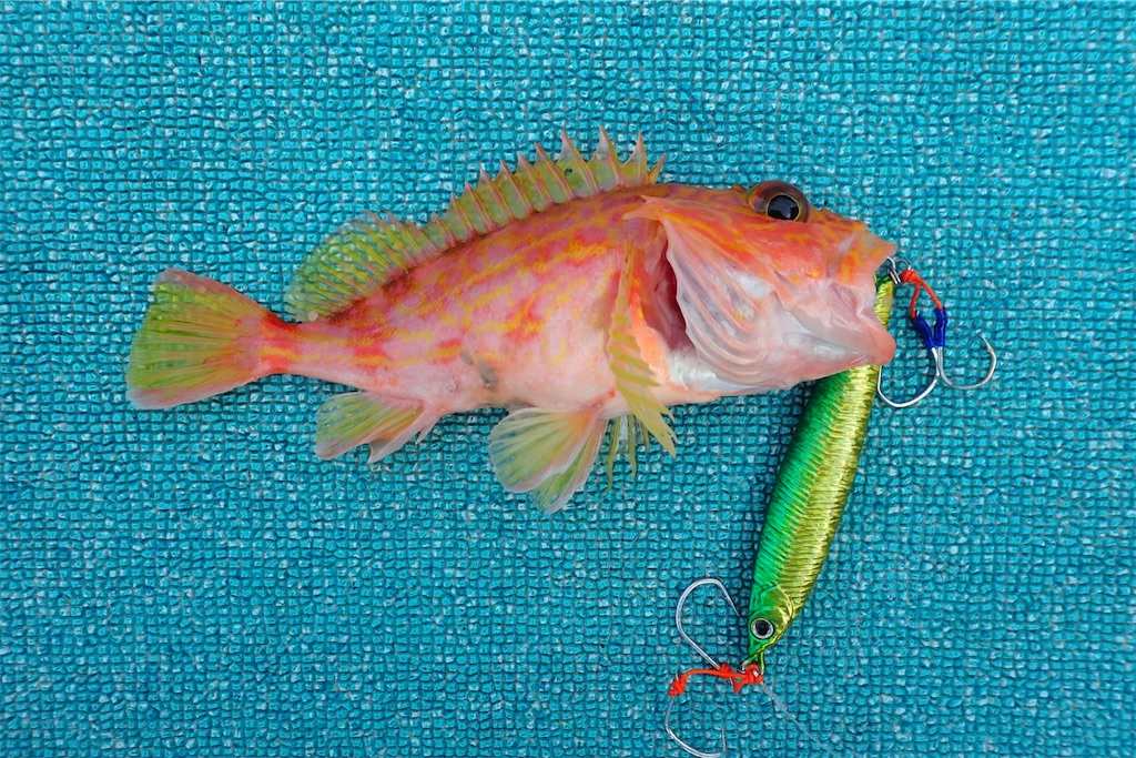 f:id:fishing-aquarium:20200721192613j:image