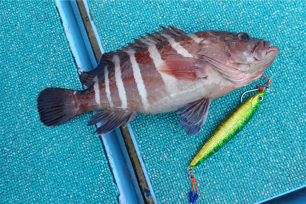 f:id:fishing-aquarium:20200721192630j:image