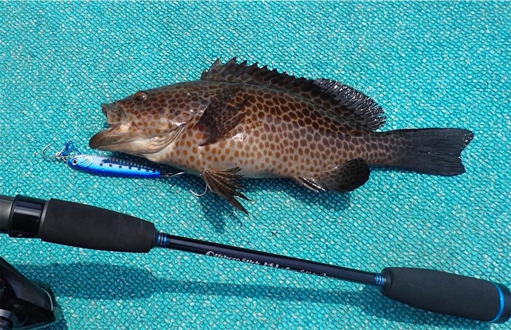 f:id:fishing-aquarium:20200721192800j:image