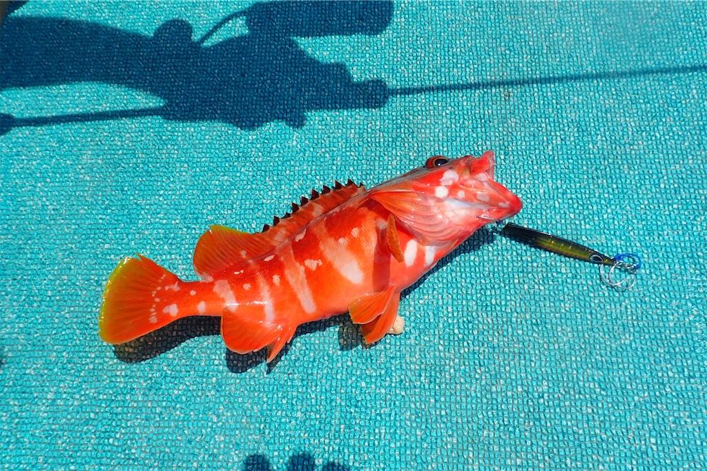 f:id:fishing-aquarium:20200721192815j:image