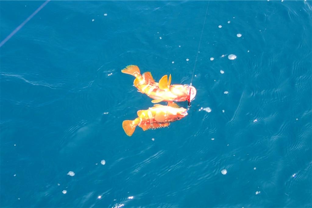 f:id:fishing-aquarium:20200721192829j:image