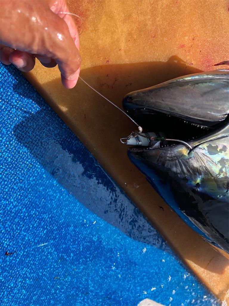 f:id:fishing-aquarium:20200831074614j:image