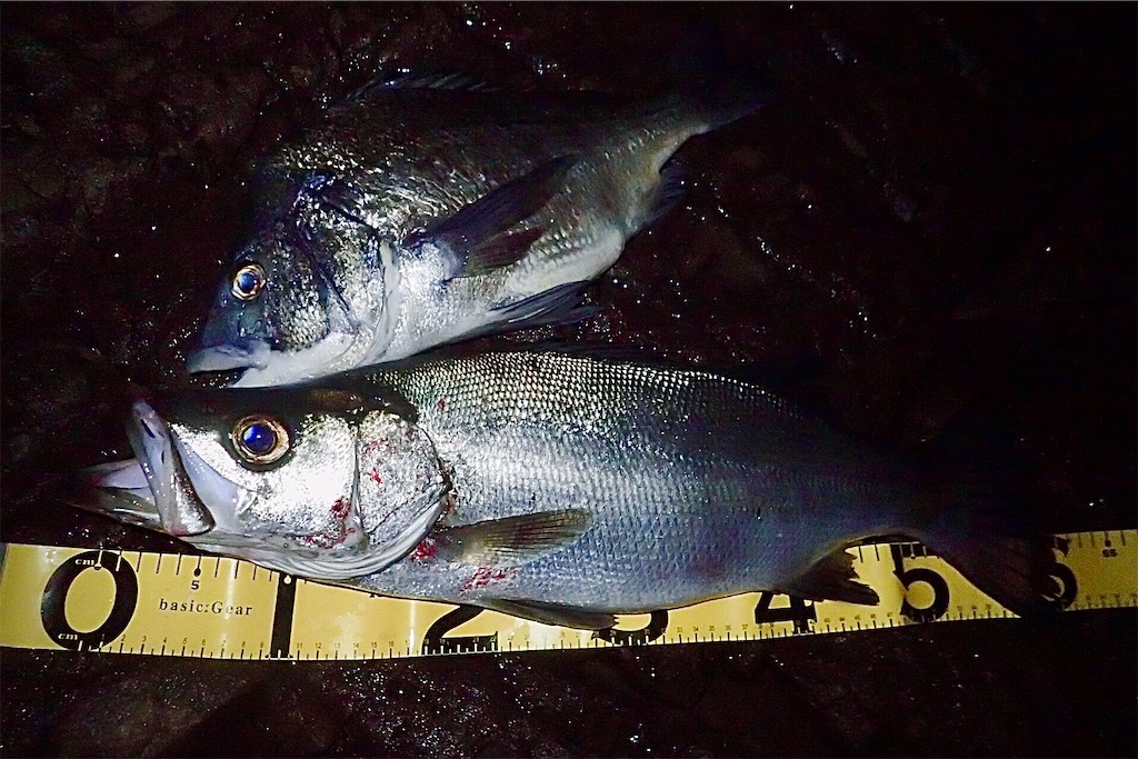 f:id:fishing-aquarium:20201022113036j:image