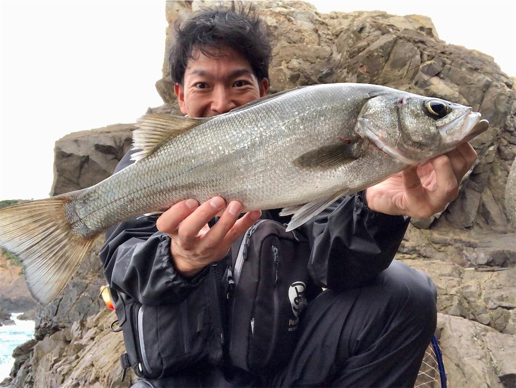 f:id:fishing-aquarium:20201024203313j:image