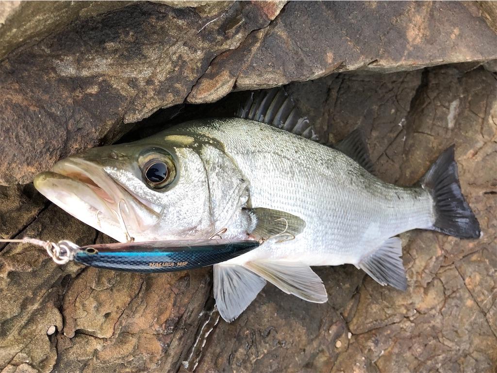 f:id:fishing-aquarium:20201114175241j:image
