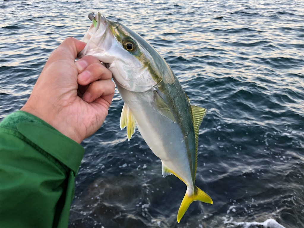 f:id:fishing-aquarium:20201114180011j:image