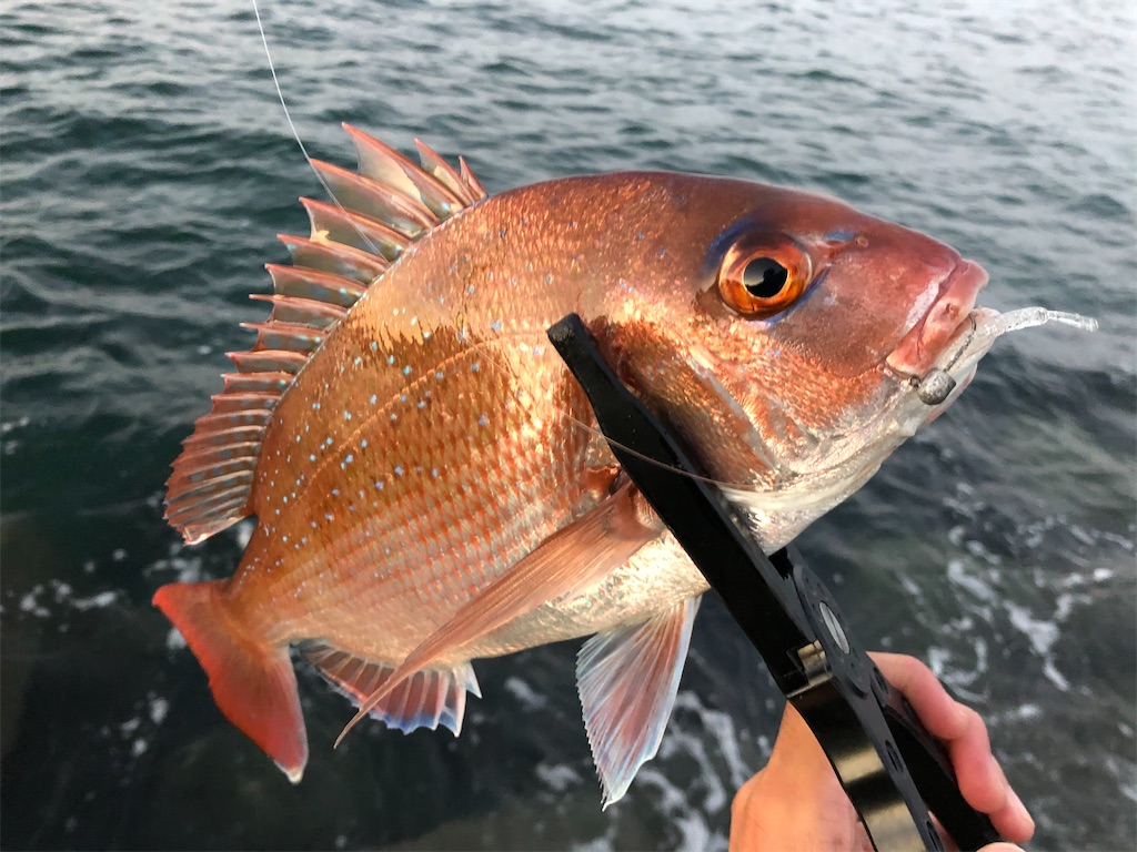 f:id:fishing-aquarium:20201114180124j:image