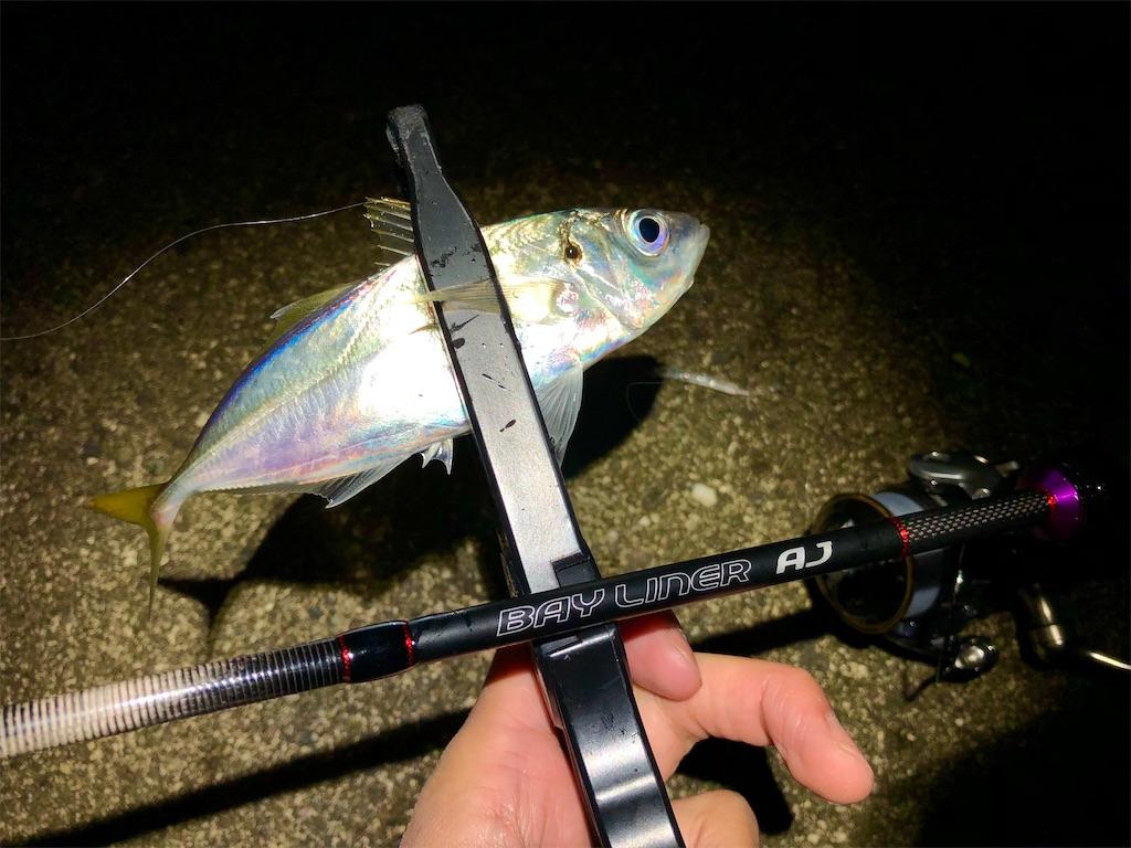 f:id:fishing-aquarium:20201114180614j:image