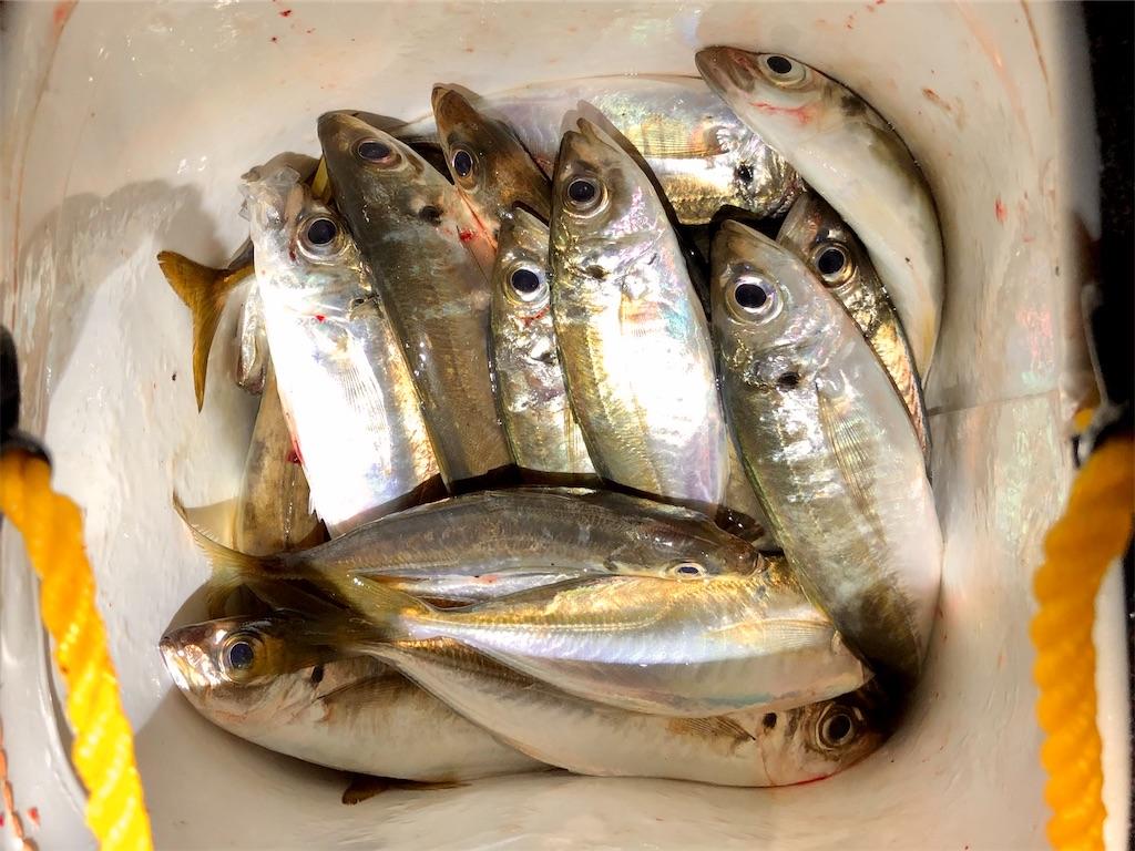 f:id:fishing-aquarium:20201115123528j:image