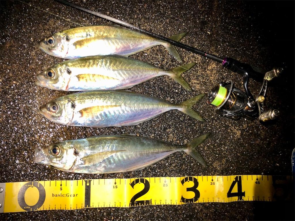 f:id:fishing-aquarium:20201205145409j:image