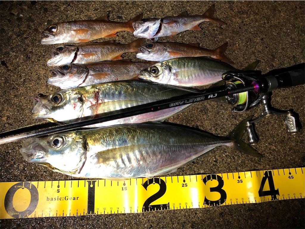 f:id:fishing-aquarium:20201205205444j:image