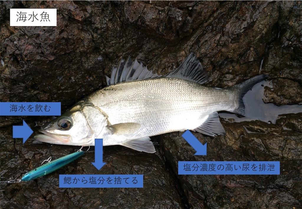 f:id:fishing-aquarium:20210114143005j:image