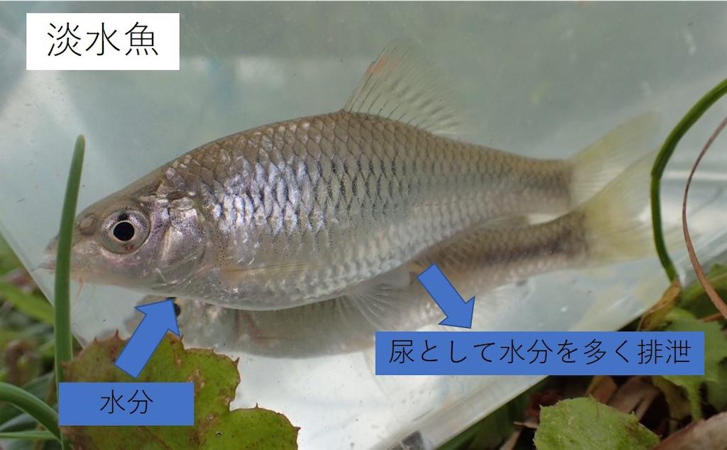 f:id:fishing-aquarium:20210114143603j:image