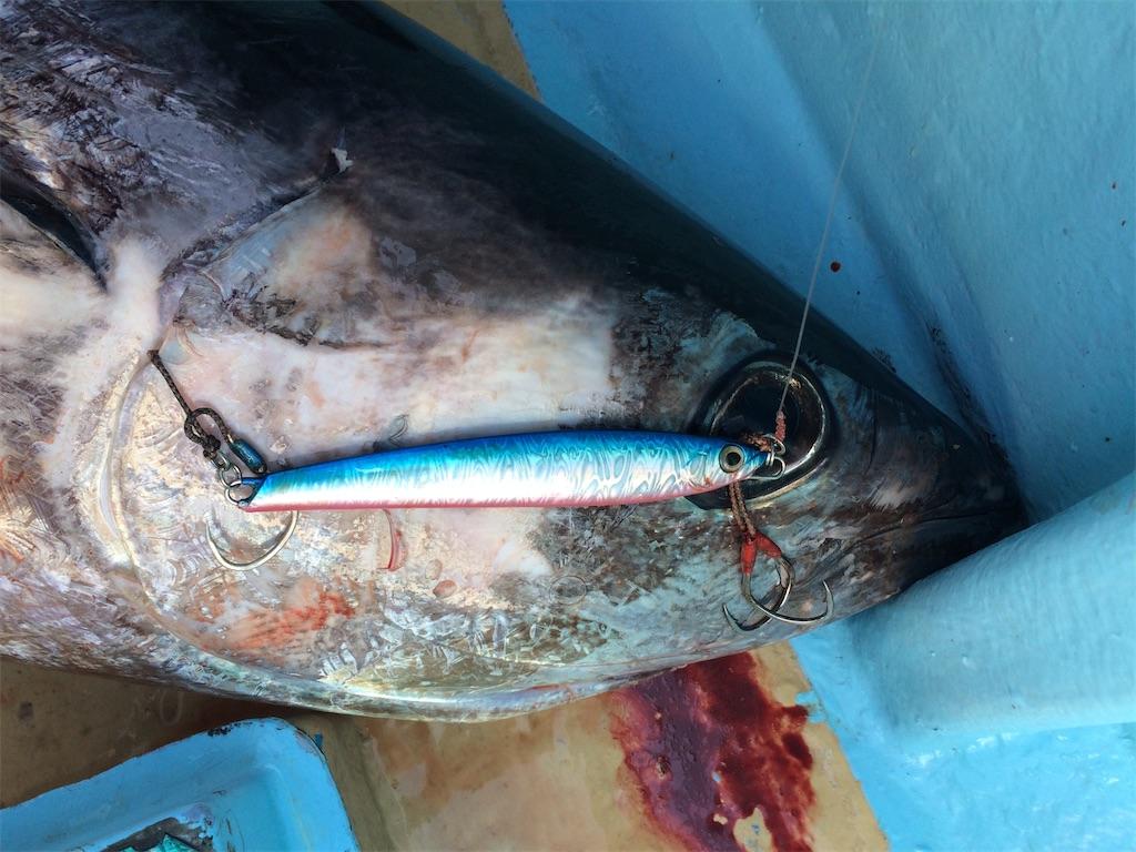 f:id:fishing-aquarium:20210203214907j:image