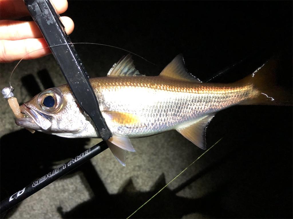 f:id:fishing-aquarium:20210302192147j:image