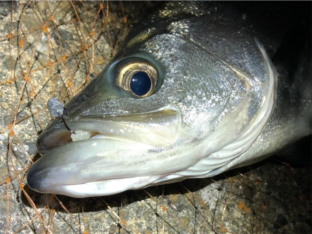 f:id:fishing-aquarium:20210302192948j:image