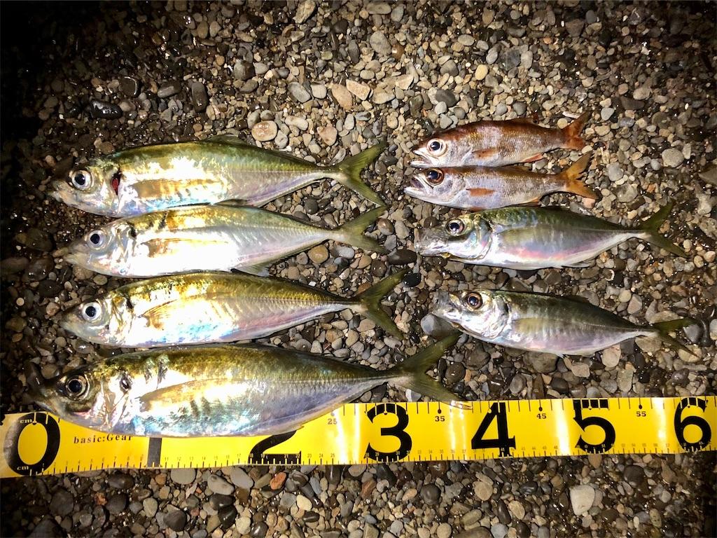 f:id:fishing-aquarium:20210302193632j:image