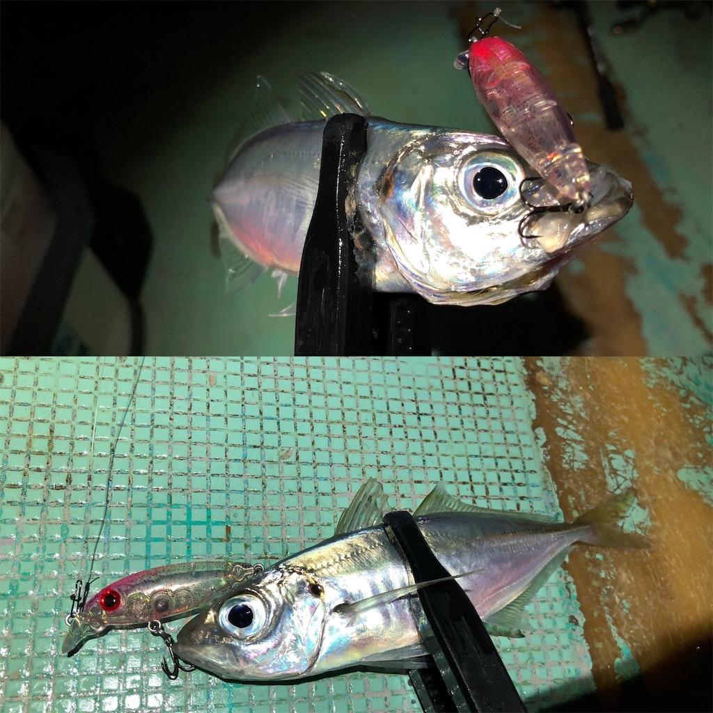 f:id:fishing-aquarium:20210414200751j:image